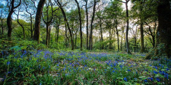 Experience Snowdonia In Springtime