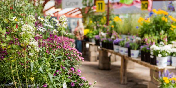 Garden Centres Snowdonia Style