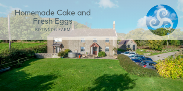 Homemade Cake and Fresh Eggs at Holiday Cottage on Working Farm, Llyn Peninsula