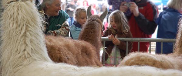 Lama at the Royal Welsh Spring Fair