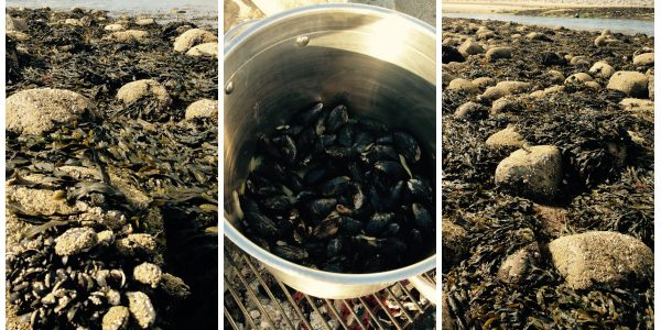 Pick Your Own Mussels In Snowdonia!