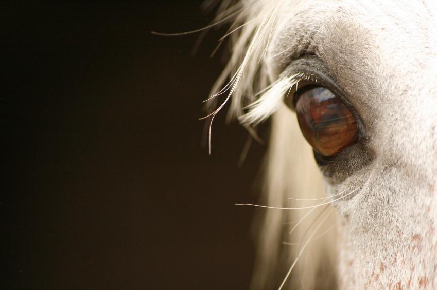 Wild Ponies of Snowdonia