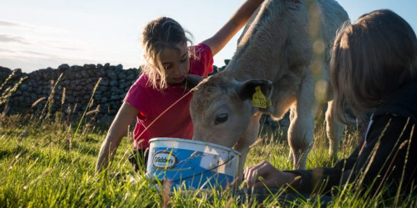 A Year in the Life of a Welsh Hill Farmer
