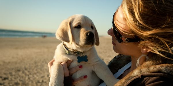 Top 5 Pet Friendly Holiday Cottages
