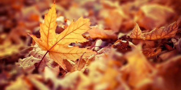 October Half Term Holiday