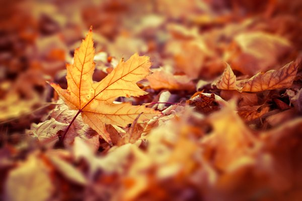 October Half Term Holiday | Autumn Self Catering Cottage North Wales