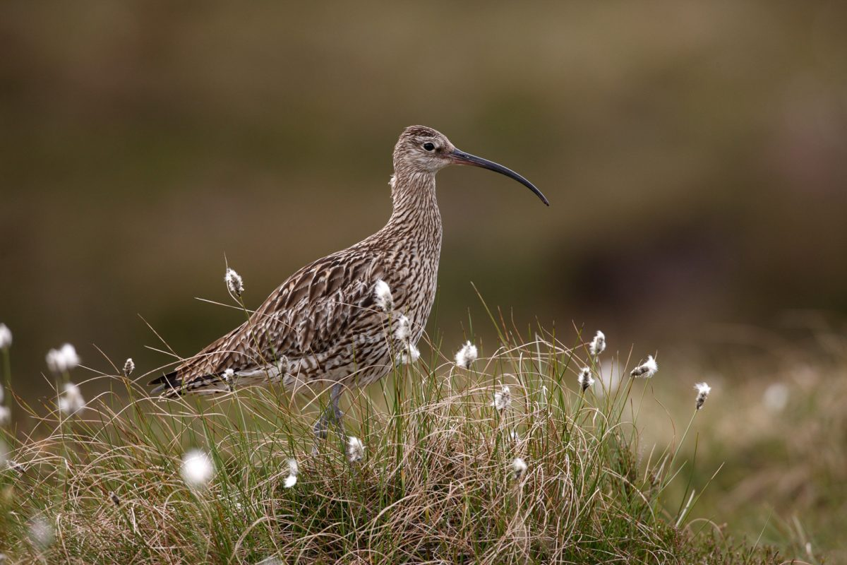 Top 5 locations for Bird Spotting in North Wales